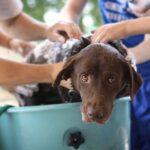 Hundepflege-Tipps