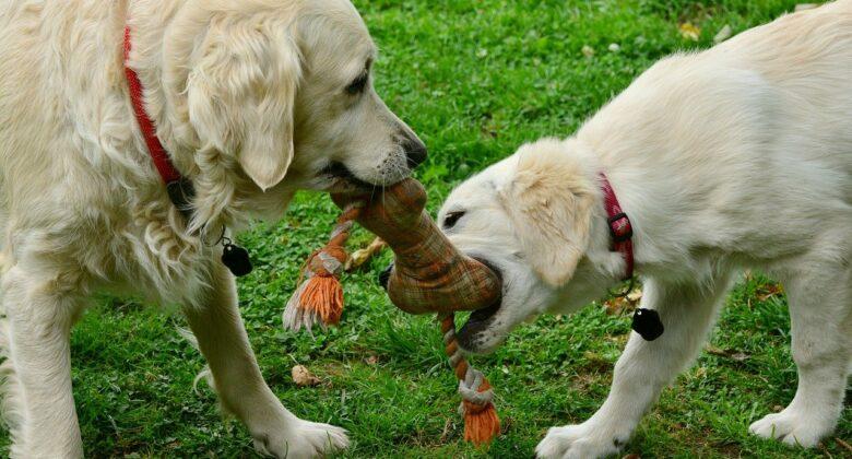 Hundespielzeug-Tipps